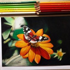 """""""Awesome butterfly by ☁︎ Tag art to for a feature, kik nawdens for I wont post much today, got a test tomorrow…"""" Portrait Draw, Flora Botanica, Tag Art, Funny Kids, Colored Pencils, Art Lessons, Bee, Butterfly, Watercolor"""