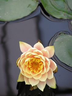 If you feel lost, disappointed, hesitant, or weak, return to yourself, to who you are, here and now. And when you get there, you will discover yourself, like a lotus flower in full bloom, even in a muddy pond, beautiful and strong ~Masaru Emoto