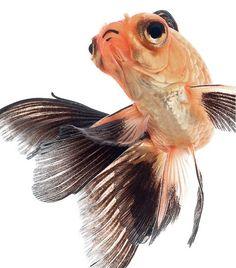 Combattants – De magnifiques portraits de poissons