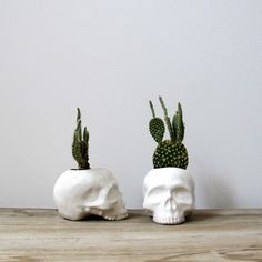 Ceramic Skull Planter Perfect for Cactus Succulent or Air Plant ($42) ❤ liked on Polyvore featuring home, home decor, grey, home & living, home décor, taxidermy & curiosities, skull home decor, skull home accessories, succulent planter and ceramic planters