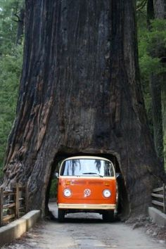 Drive Thru Tree, Sequoia National Forest, California. Even though this is for a destination, I remember the VW vans. My older brother had 1. At time it was sooo embarrassing because we had to run behind it in order to push it off to start. Then run and jump through the slide door. Gosh! It also had a large, oversize foot shaped gas pedal.