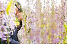満開の藤に囲まれてエンゲージメントフォト @河内藤園でエンゲージメントフォト - ○○しゃしんのじかん http://blog.goo.ne.jp/moriken_photo/