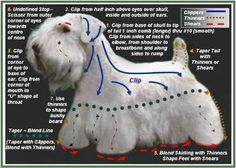 Dog Grooming Instructions | Grooming Charts | Grooming Pictures ...