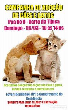 BONDE DA BARDOT: RJ: Adoção de cães e gatos na Barra da Tijuca, neste domingo (06/03)