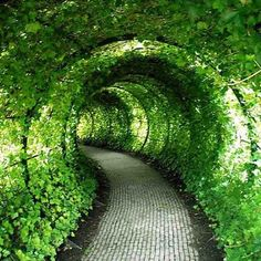 Garden tunnels are completely magical. I wish we had this in our garden***Research for possible future project. (Hey sweetheart - think the neighbors would mind if we bulldozed their house? This would be really cool...)