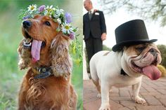 animal de compagnie au mariage