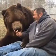for more videos Big cuddly bear! Cute Funny Animals, Cute Baby Animals, Animals And Pets, Big Animals, Beautiful Creatures, Animals Beautiful, Beautiful People, Unusual Animals, Cute Animal Videos