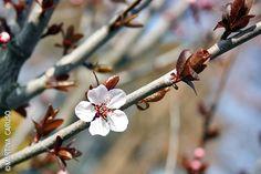 Little flower - Follow me on http://urlin.it/2e070