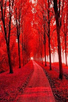 "chakra Red - Being in nature is ""grounding"" Red Tree, Pink Trees, Red Aesthetic, Shades Of Red, Nature Pictures, Beautiful Landscapes, Chakra, Favorite Color, Paths"