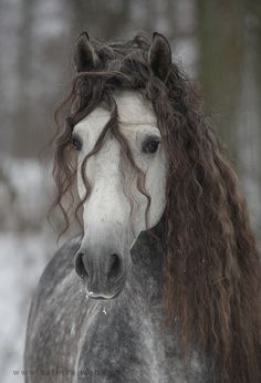 Horse Heaven - this is going in camels because it is as perfect as camels Tranquil Confidence Most Beautiful Horses, All The Pretty Horses, Animals Beautiful, Majestic Horse, Majestic Animals, Cute Horses, Horse Love, Funny Horses, Horse Photos