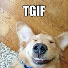 Yes!! It's Friday! Come enjoy our dog friendly patio, amazing breakfast menu, delicious lunch, happy hour and mussels today! Yippee! Fabulous Friday is here! #TGIF #HappyHour #EatLocal