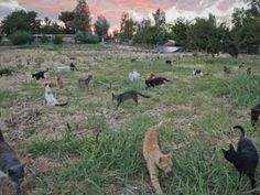 The Cat House on the Kings in Ca. roaming cats at the rescue