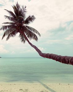 Salad Beach, Koh Phangan - Thailand Koh Phangan, Thailand, Salad, Beach, Travel, The Beach, Beaches, Salads, Lettuce