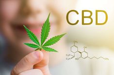 Buy Hemp oil from Vita. Colorado manufacturer of CBD Full spectrum Hemp oil products. Our hemp CBD Oil for sale is high quality third-party lab tested. Cannabis, Health Words, Hemp Leaf, Endocannabinoid System, Cbd Oil For Sale, Cbd Hemp Oil, Ptsd, Breast Cancer, Safety
