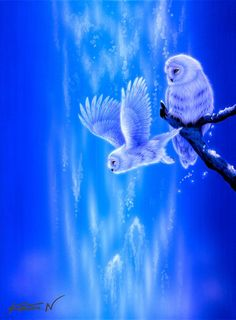 """Owl--independence"" by Kentaro Nishino"