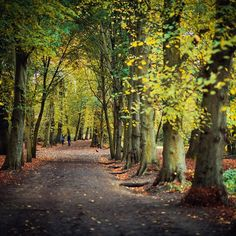 And now I miss even autumn 😉🌳🍂🇬🇧 #London #HampsteadHeath #park #Nikon #D810 #evening #lowlight #NikonNoFilter @nikontop #tree #autumn #visitLondon