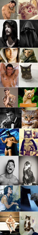 Doppelcats - Imgur