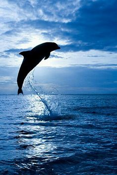 Dolphin: Fit, beautiful, active, intelligent, socially competent, extrovert.