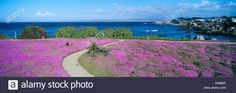 Flower lined ocean walk at Pacific Grove California Stock Photo