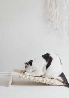 Don't let pet accessories clash with your modern decor! Build your own stylish DIY cat scratcher to keep both your kitties and your design aesthetic happy.