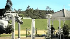 horse show jumping gifs - Google Search