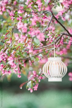 Stock photo of Lantern hanging from a tree by melissann Spring Theme, Spring Colors, Pink Garden, Easter Weekend, Welcome Spring, Spring Has Sprung, Happy Spring, Happy Easter, Deco