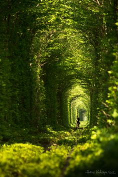 green natural tunnel by Andrii Voloshyn / 500px  In Klevan city in Ukraine there is a natural tunnel of trees created by trains - it calls tunnel of love.
