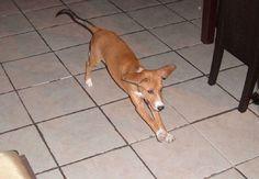Μπορεί ένας σκύλος να έχει εκπαιδευτεί και να έχει μάθει το μάθημα της τουαλέτας, με αποτέλεσμα να κάνει την ανάγκη του εκεί που του έχετε υποδείξει. Αν όμως ο χαρακτήρας του είναι υποτακτικός, ίσως όταν σας βλέπει να μπαίνετε μέσα στο σπίτι, να σας υποδέχεται με τόση χαρά και ενθουσιασμό που θα κατουριέται πάνω του...