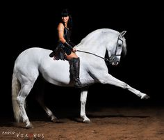 Lipizzaner With Woman In Arena by Vikarus 2009 Horse Dance, Horse Art, Horse Spirit Animal, Lipizzan, Spanish Riding School, Trick Riding, Types Of Horses, All About Horses, Western Pleasure
