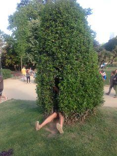 Hollow trees in Parc de Ciutadella, could be fun.