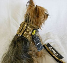 new dog cat clothing apparel vest harness leash gold sparkly  bling xxs xs s m