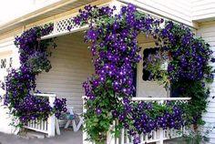 Tienes un gran espacio alrededor de tu casa el cual ornamentarás con enredaderas, gazebos y pergolas en el jardín.