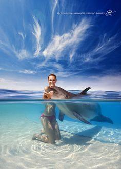 The Dolphin Hug, #dolphin  #dolphins  @giftkone