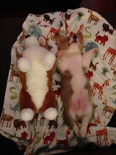 Sleeping with my new stuffed pal....