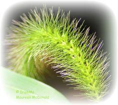 Caterpillar-Like Plant  By Maureen McDonald