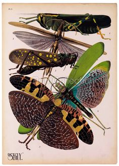 Insects, Plate 8