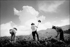 THE PEOPLE OF CLOUDS - Award-winning photographer, Matt Black, captures the people and land of the Mixteca, one of the world's last bastions of traditional indigenous life in Mexico. Many have their native land to provide the labor that fuels California's multi-billion dollar agricultural machine.