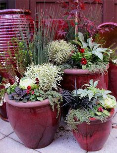 Via: plantas. Via: plantas.facilisim The post deep red black white & greens. Via: plantas.faci appeared first on Garden Ideas. Winter Container Gardening, Container Plants, Herb Gardening, Fall Planters, Garden Planters, Balcony Garden, Rose Trellis, Fall Containers, Succulent Containers