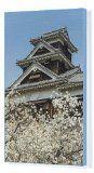 Canvas Print of Cherry blossom and Kumamoto Japanese Castle, Kumamoto, Kyushu, Japan, Asia from Robert Harding - http://japanmegatravel.com/canvas-print-of-cherry-blossom-and-kumamoto-japanese-castle-kumamoto-kyushu-japan-asia-from-robert-harding/