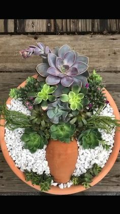 Succulents In Containers, Cacti And Succulents, Planting Succulents, Succulent Centerpieces, Succulent Arrangements, Succulent Gardening, Succulent Pots, Succulent Garden Ideas, Succulent Frame