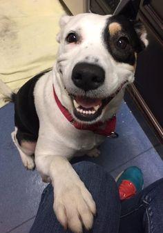 Perro feliz porque acaba de ser adoptado #lavozdelmuro  #mascotas #perros #dogs #animales