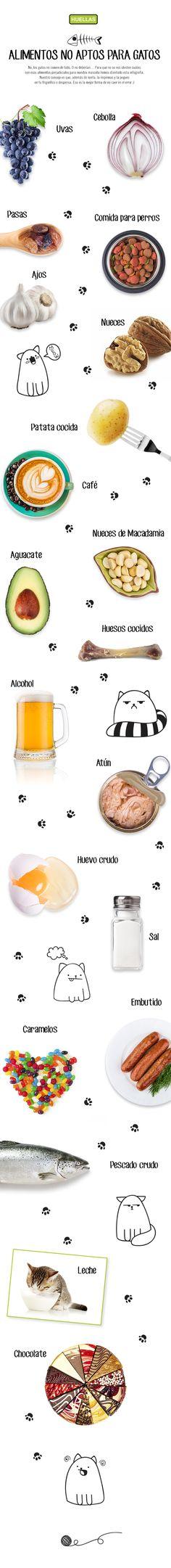 Alimentos no aptos para gatos
