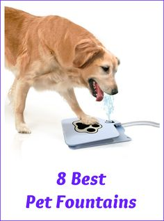 Need a great and easy way to give your dog or cat fresh water on demand? There are many pet fountains on the market, but these 9 indoor and outdoor pet fountains stand out as the best in terms of quality, design and overall value. Cute Puppies, Cute Dogs, Dogs And Puppies, Doggies, I Love Dogs, Puppy Love, Dog Water Fountain, Drinking Fountain, Large Dog Breeds