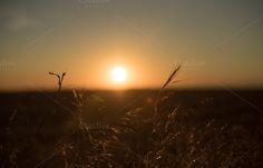 silhouette of plants at sunset by Ekaterina Tarasenko on Creative Market