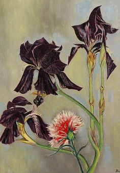 Jean Cocteau (French, Intercepted by Gravitation Botanical Illustration, Botanical Prints, Illustration Art, Art Floral, Milly La Foret, Iris Drawing, Jean Cocteau, Still Life Flowers, Found Art