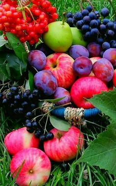 Fruit And Veg, Fruits And Vegetables, Fresh Fruit, Vegetables Photography, Fruit Photography, Beautiful Fruits, Beautiful Flowers, Beautiful World, Fruit Picture