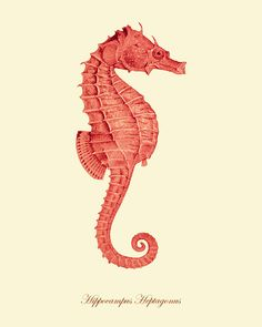 Seahorse art print Vintage old prints home decor wall art beach Ocean Decor Natural History art sea life art antique prints nature print