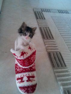 Efe İçin Ömürlük Yuva Arıyoruz Cats, Animals, Gatos, Animales, Animaux, Animais, Kitty, Cat, Animal