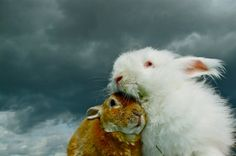 Potentially Nervous Fine Art Bunny Photography Home Decor Nursery Art Rabbit Photo Easter Gift  Angora Rabbit Rex Rabbit Bunny Photos.