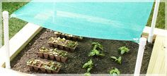 Raised Garden With A Shade Cloth To Protect The Veggies